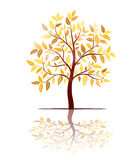 Autumn tree with leaves vector Stock Photos
