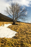 Autumn tree without leaves, yellow grass and first snow with natural sky on background, Iceland Stock Photography
