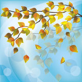 Autumn tree, light nature background. Autumn tree with yellow flying leaves, light nature background, place for text Stock Image