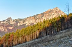 Autumn tree line with rocky mountain Royalty Free Stock Photography