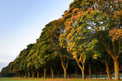 Autumn tree line at sunrise Stock Photography