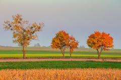 Autumn tree line stock photo
