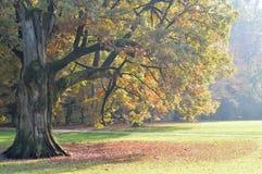 Autumn tree in Maksimir park, Zagreb, Croatia Stock Images