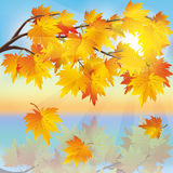 Autumn tree maple on background of sunset Stock Photo