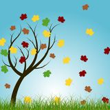 Autumn tree. With maple leafs Royalty Free Stock Photos