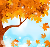 Autumn tree maple leaves against the blue sky Stock Image