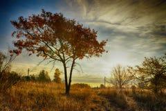 Autumn tree on meadow with dramatic sky Stock Photos