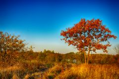 Autumn tree on meadow over blue sky background Stock Photo