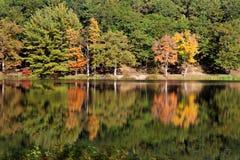 Autumn Tree Mirror immagini stock libere da diritti