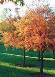 Autumn Tree Morning Dew Imágenes de archivo libres de regalías