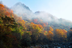 Autumn tree and mountain Stock Image