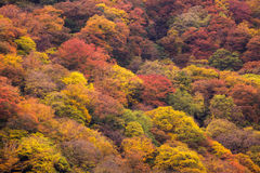 Autumn tree in mountain Stock Photos