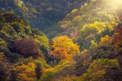 Autumn tree in mountain Stock Photo