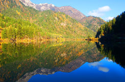 Autumn tree mountain and lake Stock Photography