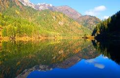 Autumn tree mountain and lake Stock Photography