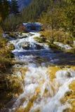 Autumn tree mountain and lake in jiuzhaigou Stock Photography