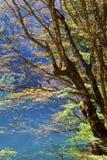 Autumn tree mountain and lake in jiuzhaigou Royalty Free Stock Image