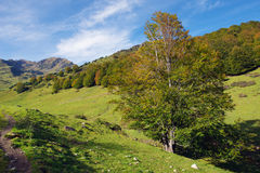 Autumn tree in the mountain Stock Photography