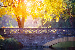 Autumn tree near the bridge in park Stock Images