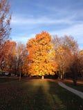 Autumn Tree nei punti culminanti di tramonto fotografia stock