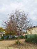 Autumn tree Stock Images