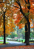 Autumn tree in October. Autumn tree in late October at the park royalty free stock photo