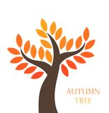 Autumn tree with orange leaves. Stock Images
