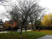 Autumn tree. Orange season nature Stock Photos