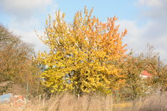 Autumn tree Stock Photo