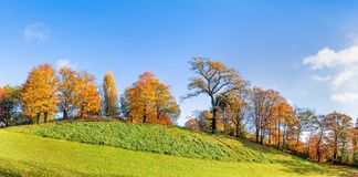 Autumn Tree Panorama Stock Afbeelding