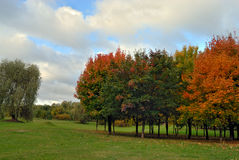 Autumn tree in park Royalty Free Stock Photography