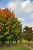 Autumn tree in park Stock Photo