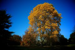Autumn. Tree in the park in autumn Royalty Free Stock Photos