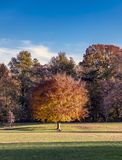 Autumn tree in the park royalty free stock photography