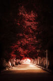 Autumn Tree Path rojo oscuro Imágenes de archivo libres de regalías