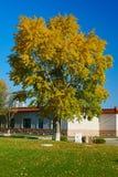 A autumn tree Royalty Free Stock Image