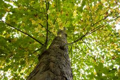 Autumn tree. Photos of the tree leaves in the fall royalty free stock photos