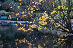 Autumn tree and pond Stock Photography
