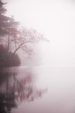Autumn tree and  pond in mist. Tree with autumn foliage reaching over pond on a misty morning Royalty Free Stock Photography
