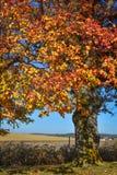 Autumn Tree por el campo de granja imagenes de archivo