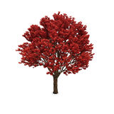 Autumn tree with red foliage Stock Photo