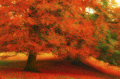 Autumn. A tree in Autumn with red leaves and soft light Stock Images