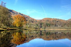 Autumn tree reflected in Grasmere Stock Photo