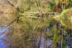 Autumn tree reflecting on lake Royalty Free Stock Photography