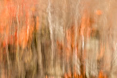 Autumn Tree Reflection Background abstrato Imagem de Stock