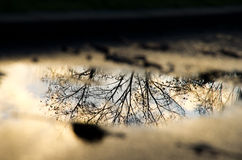 Autumn tree reflection. In the swamp Royalty Free Stock Photos