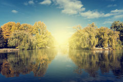 Autumn tree reflection in water lake at daytime Royalty Free Stock Image