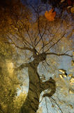 Autumn tree reflection in water Stock Images