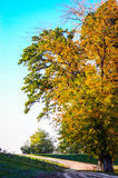Autumn tree and road Royalty Free Stock Photo