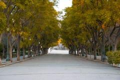 Autumn Tree Road på Zappeion arkivbilder